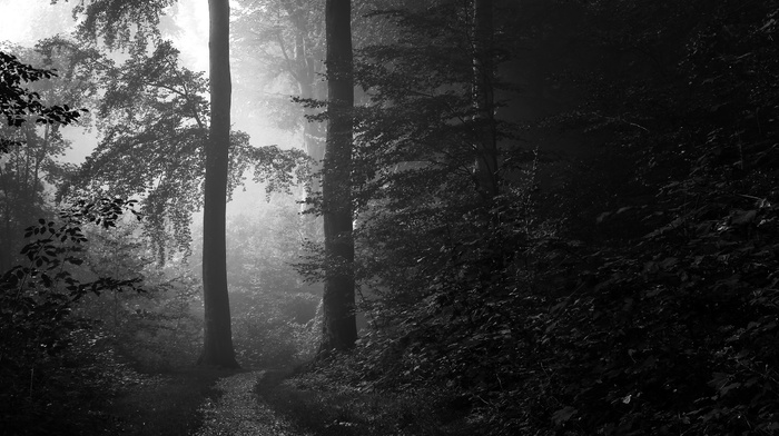 landscape, monochrome, morning, shrubs, trees, forest, path, sunlight, nature, Denmark