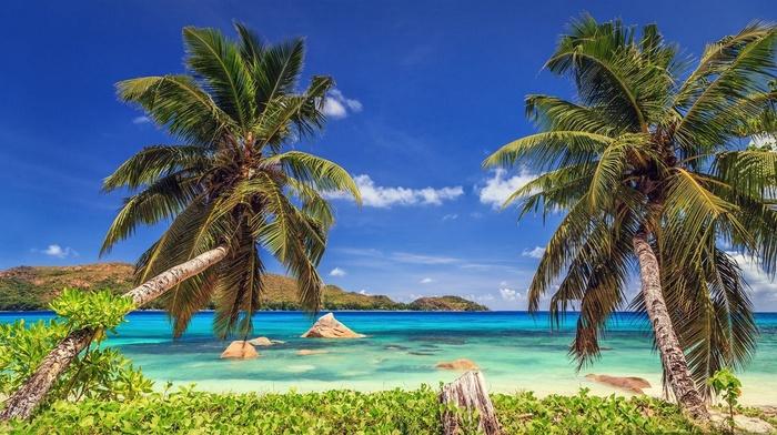 nature, summer, palm trees, island, landscape, beach, tropical, sea, Seychelles