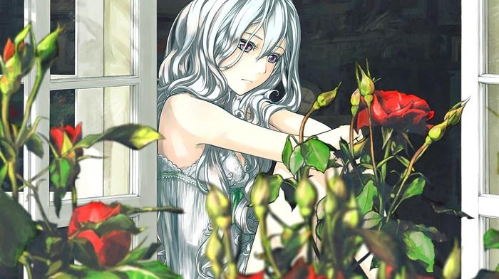 anime, original characters, window, flowers, silver hair, rose, anime girls