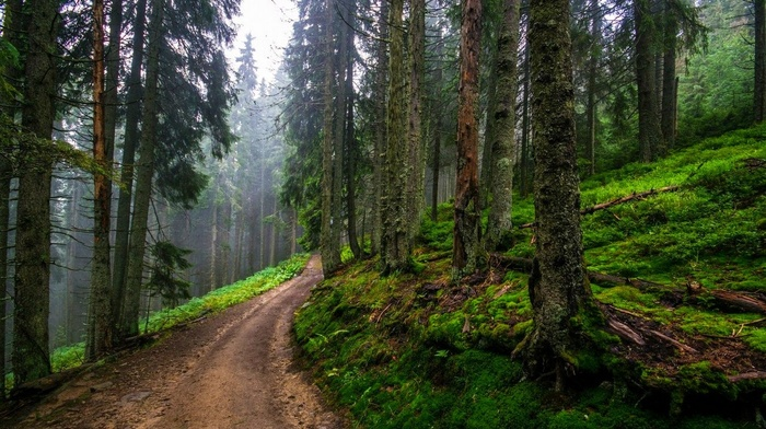 hills, dirt road, spring, path, forest, green, mist, nature, landscape, trees