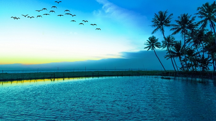 nature, palm trees, sea, lake, flying, birds, landscape, beach, blue