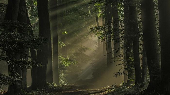 path, nature, Netherlands, forest, atmosphere, trees, sunlight, landscape, mist, sun rays, dark, morning