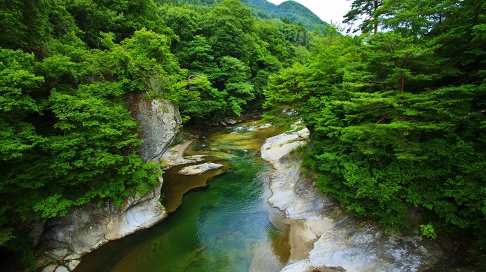 nature, shrubs, green, trees, spring, forest, landscape, river, mountains