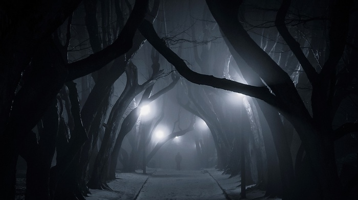 trees, Poland, mist, landscape, nature, dark, night, tunnel, lantern, urban, snow, street light