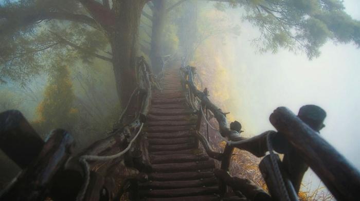 atmosphere, trees, path, wooden surface, mist, landscape, forest, bridge, nature