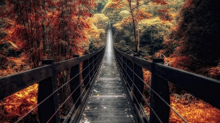 trees, nature, landscape, bridge, bamboo, fall, forest, shrubs, path, walkway, wooden surface