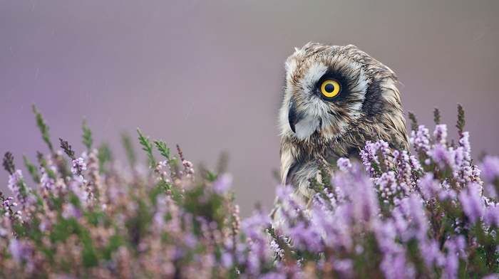 birds, depth of field, bird of prey, animals, owl, flowers, nature