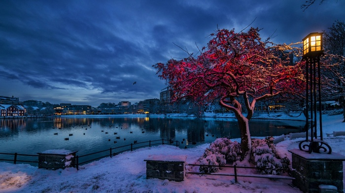 lake, snow, house, building, city, clouds, trees, lights, winter, water, Norway, birds, evening, lamp, branch, reflection, nature, cityscape