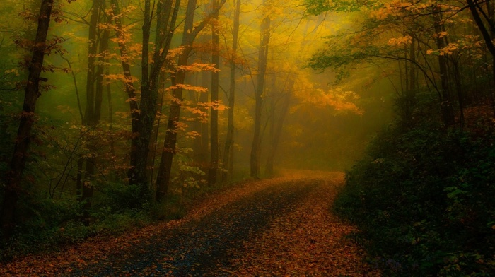 landscape, sunlight, forest, leaves, fall, trees, atmosphere, nature, path, road, mist