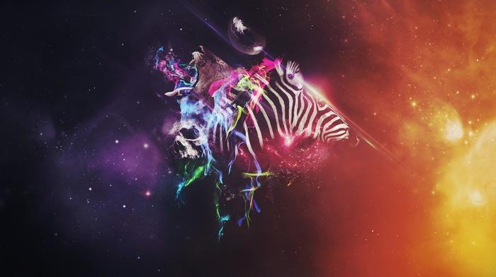 zebras, photoshop, animals, colorful