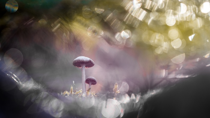 macro, depth of field, mushroom, bokeh
