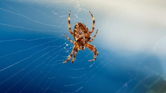 animals, spider
