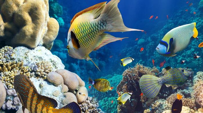 underwater, fish, coral, animals