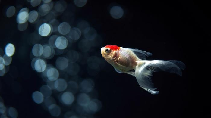 animals, fish
