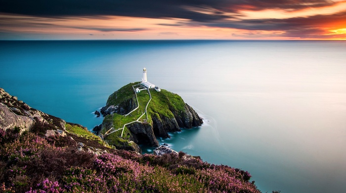 lighthouse, UK, sea, flowers, landscape, Wales, coast