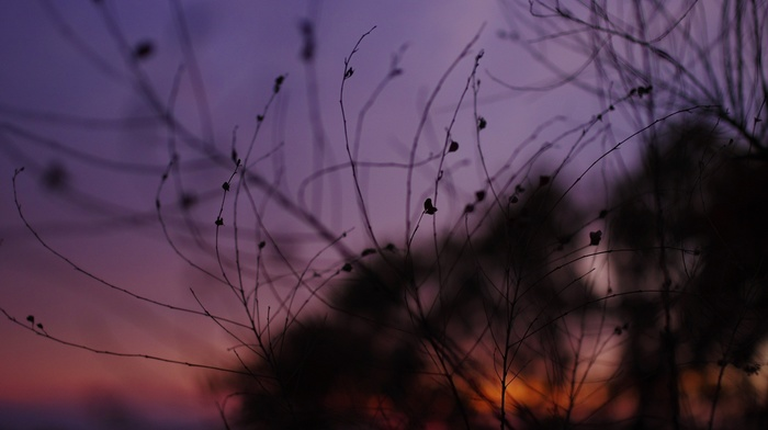 nature, plants, silhouette