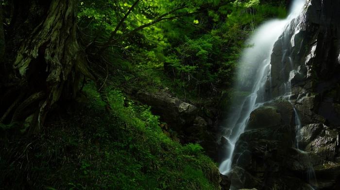 landscape, waterfall, forest