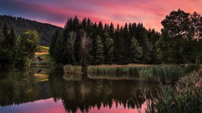 landscape, lake, pine trees, nature