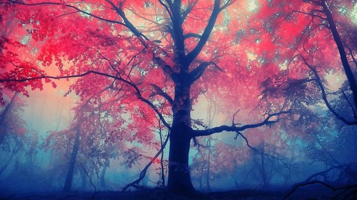 trees, mist, red leaves