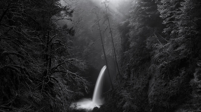 morning, forest, monochrome, mist, Oregon, nature, trees, waterfall, landscape, sunlight, canyon