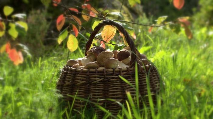 depth of field, baskets, food, grass, mushroom