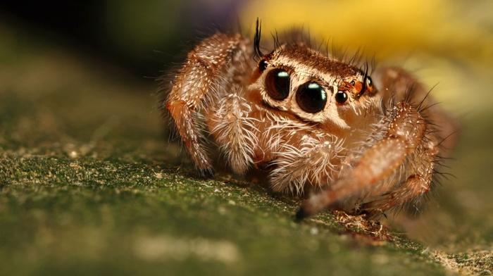 spider, animals, macro