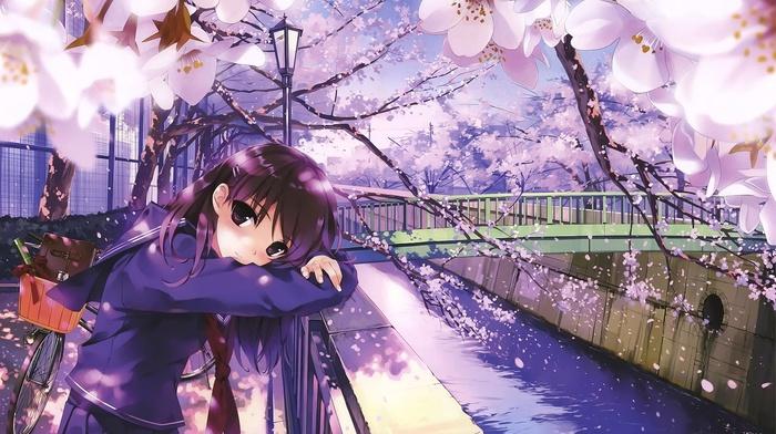 bicycle, anime, cherry blossom, anime girls, river, school uniform, bridge