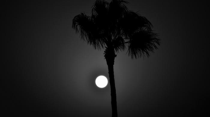 long exposure, nature, night