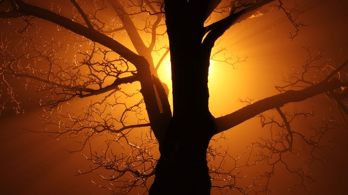 old, bright, branch, Sun, orange, yellow, abstract, dark, night, gold, trees, nature, mist, silhouette, black, lights