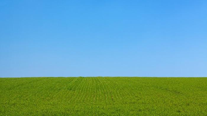 sky, park, blue, nature, green, landscape, field, grass, lawns, plants