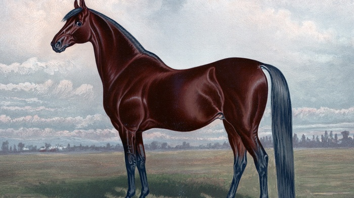 horse, brown, painting, animals, equine
