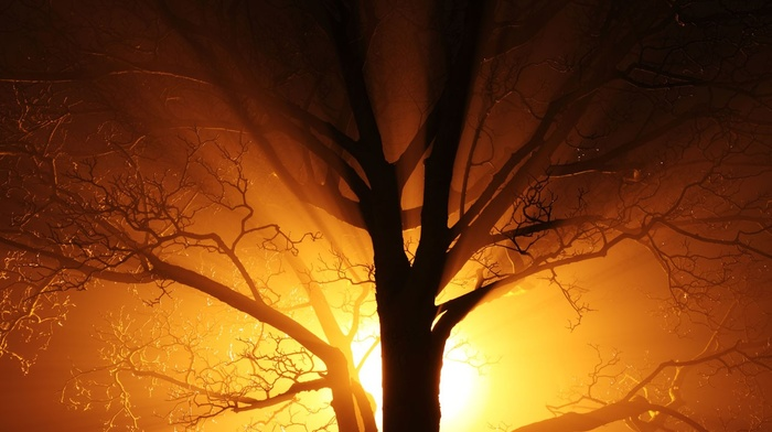 gold, orange, old, black, bright, mist, lights, nature, abstract, yellow, branch, trees, silhouette, night, dark