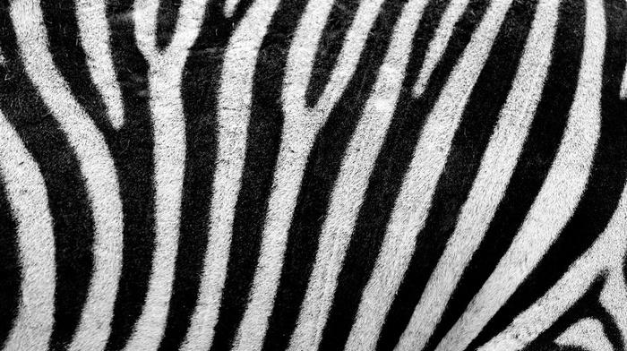 stripes, white, skin, texture, fur, abstract, animals, black, zebras, pattern, lines
