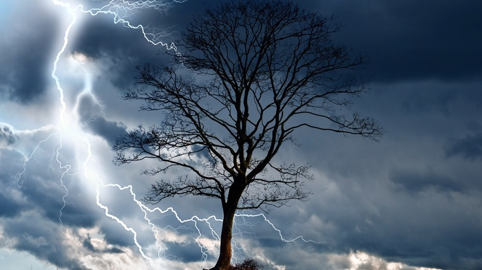 trees, nature, landscape, wind, rain, elements, dangerous, storm, wet, lightning, sky