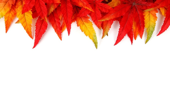red, yellow, texture, leaves, orange, fall, pattern, green, abstract, colorful, nature, seasons, bright