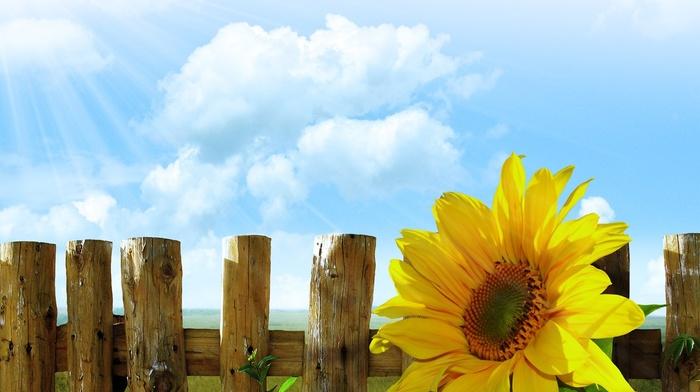 wall, lights, sky, wood, grass, Sun, sunflowers, fence, flowers, clouds