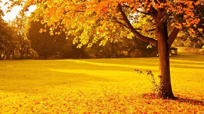 gold, seasons, park, nature, orange, sunset, red, leaves, yellow, fall, sunlight, lights, foliage, trees