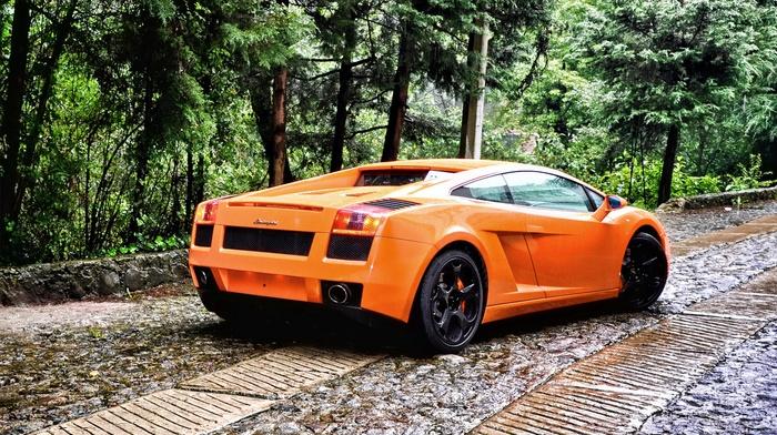 Lamborghini, forest, car