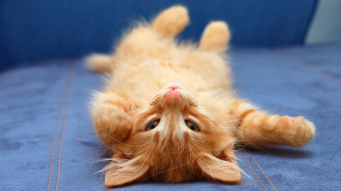 upside down, cat, animals