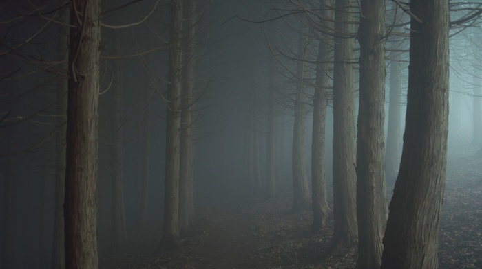 forest, night, mist, trees