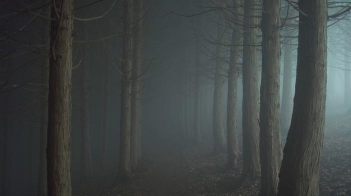 forest, night, mist, trees