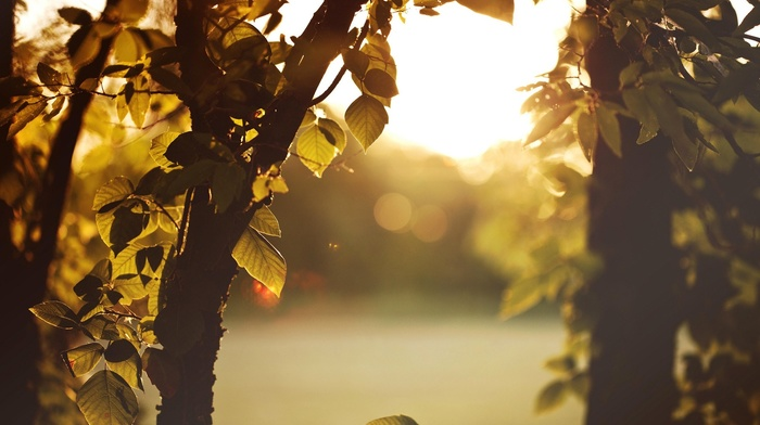 sunlight, nature, leaves, forest