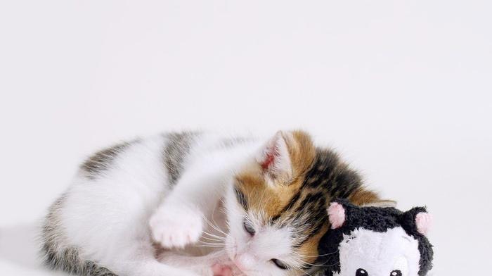 kittens, animals, stuffed animal, toys, sleeping, baby animals, cat