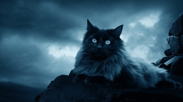 sky, cat, rocks, clouds, feline, animals