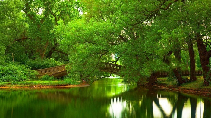 bridge, trees, green