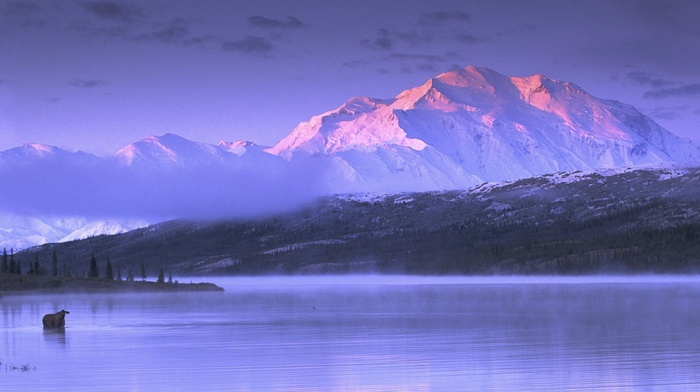 landscape, lake, Alaska, moose, nature, cold, sunset, mountains, mist, snow