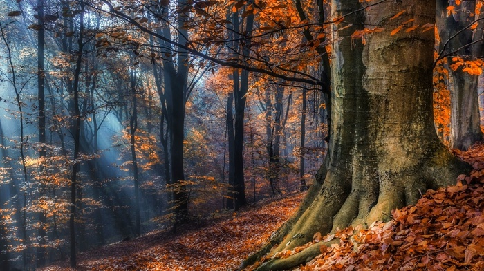 leaves, landscape, nature, mist, Poland, forest, sun rays, trees, sunlight, fall