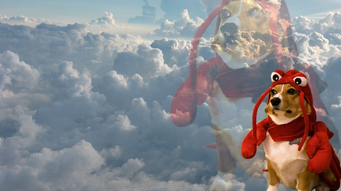 lobsters, inspirational, sky, whatthefuckamidoing, Dodge, clouds, dog