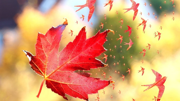 depth of field, maple leaves, artwork, windy, leaves, fall, birds, flying, swallow bird, photo manipulation, nature