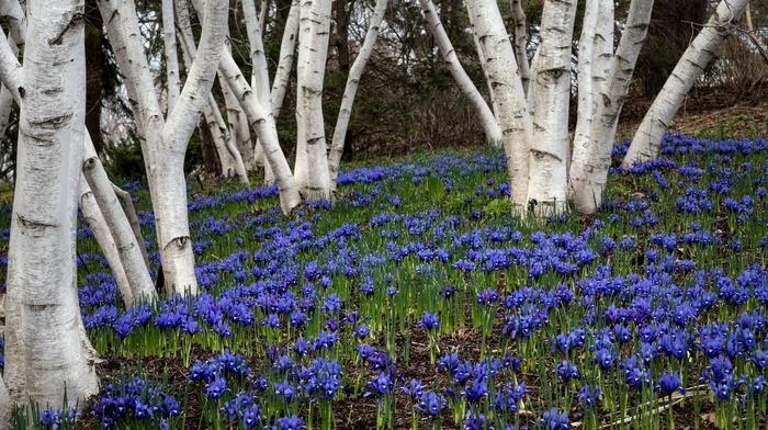 nature, flowers, plants, trees